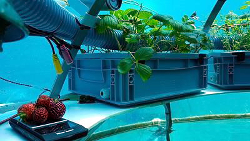 Nemo's Garden: OceanReefGroup 2021